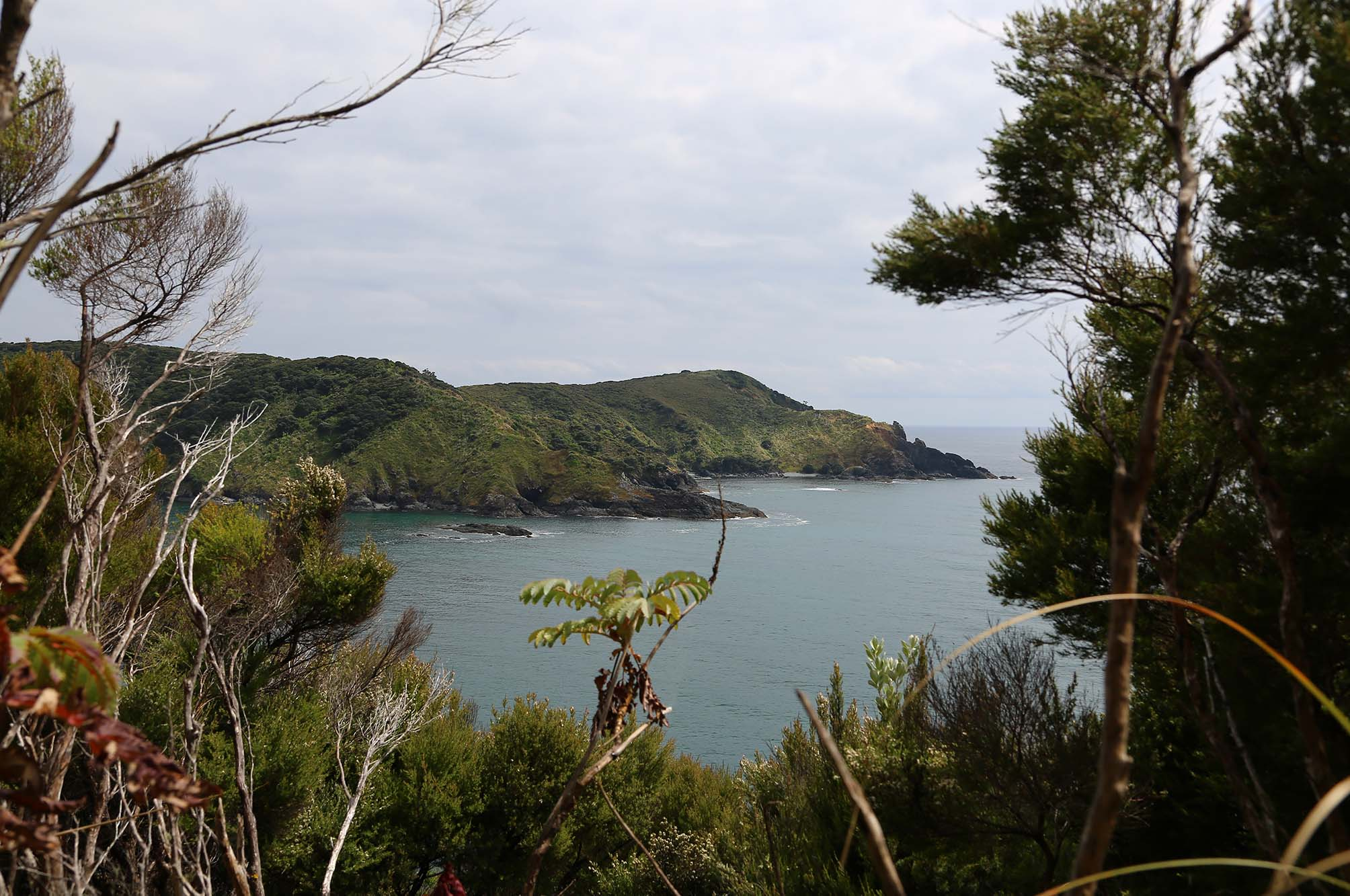 Auckland to Matai Bay
