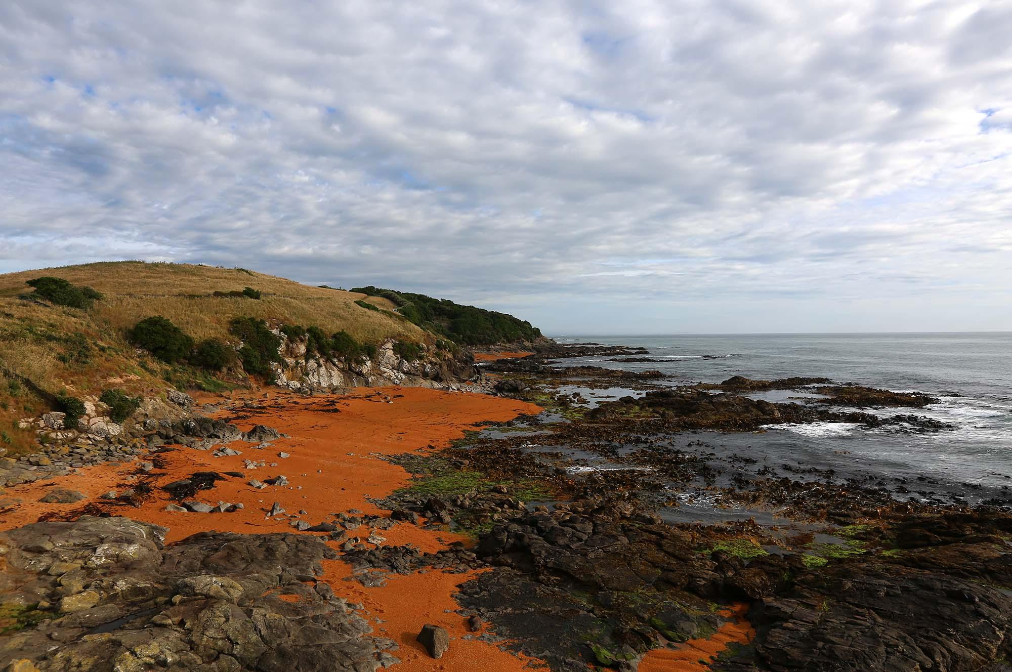 Matt-Landscape-NZ_0019_3Z6A9911