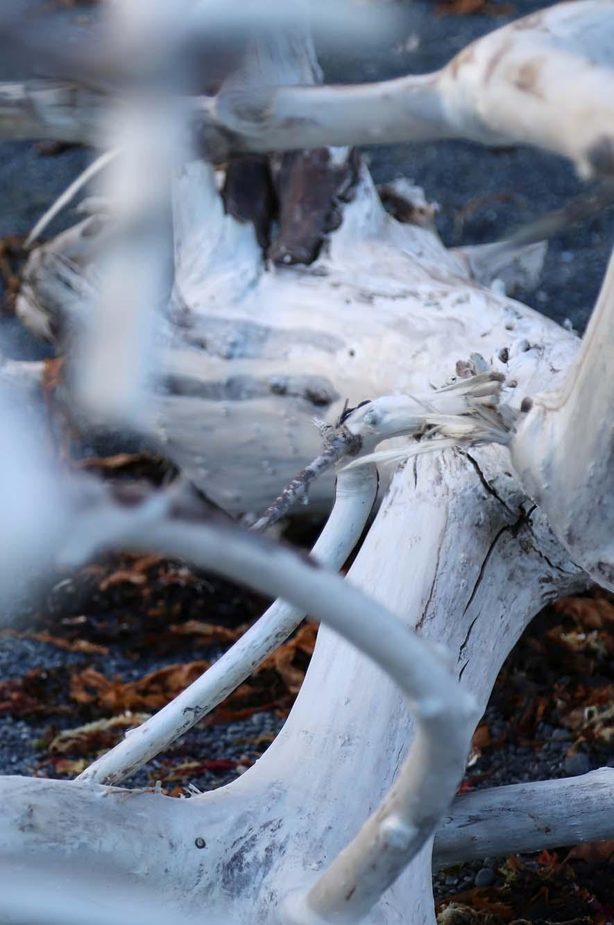 NZ-driftwood