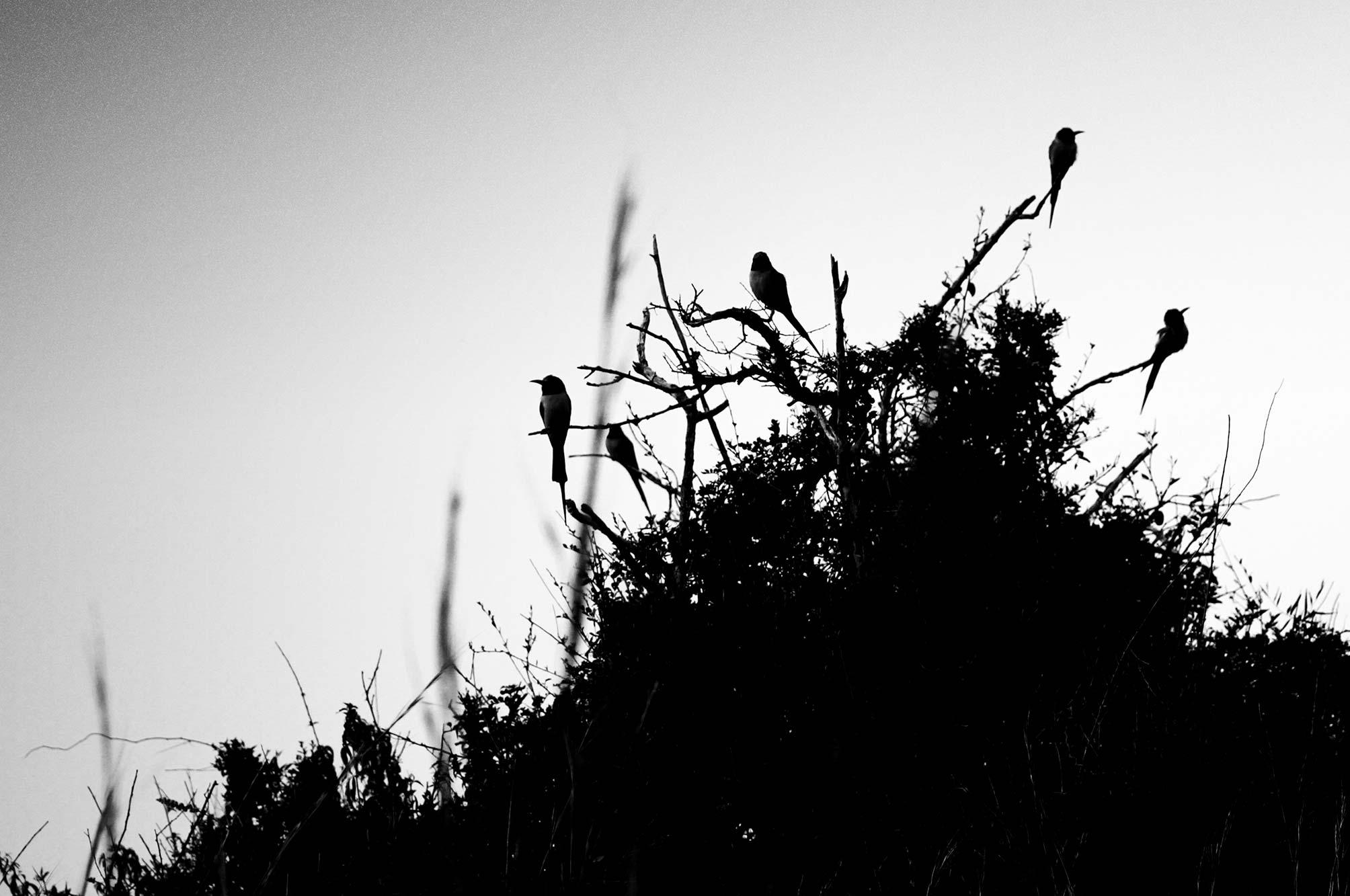 Uganda Birds on Safari