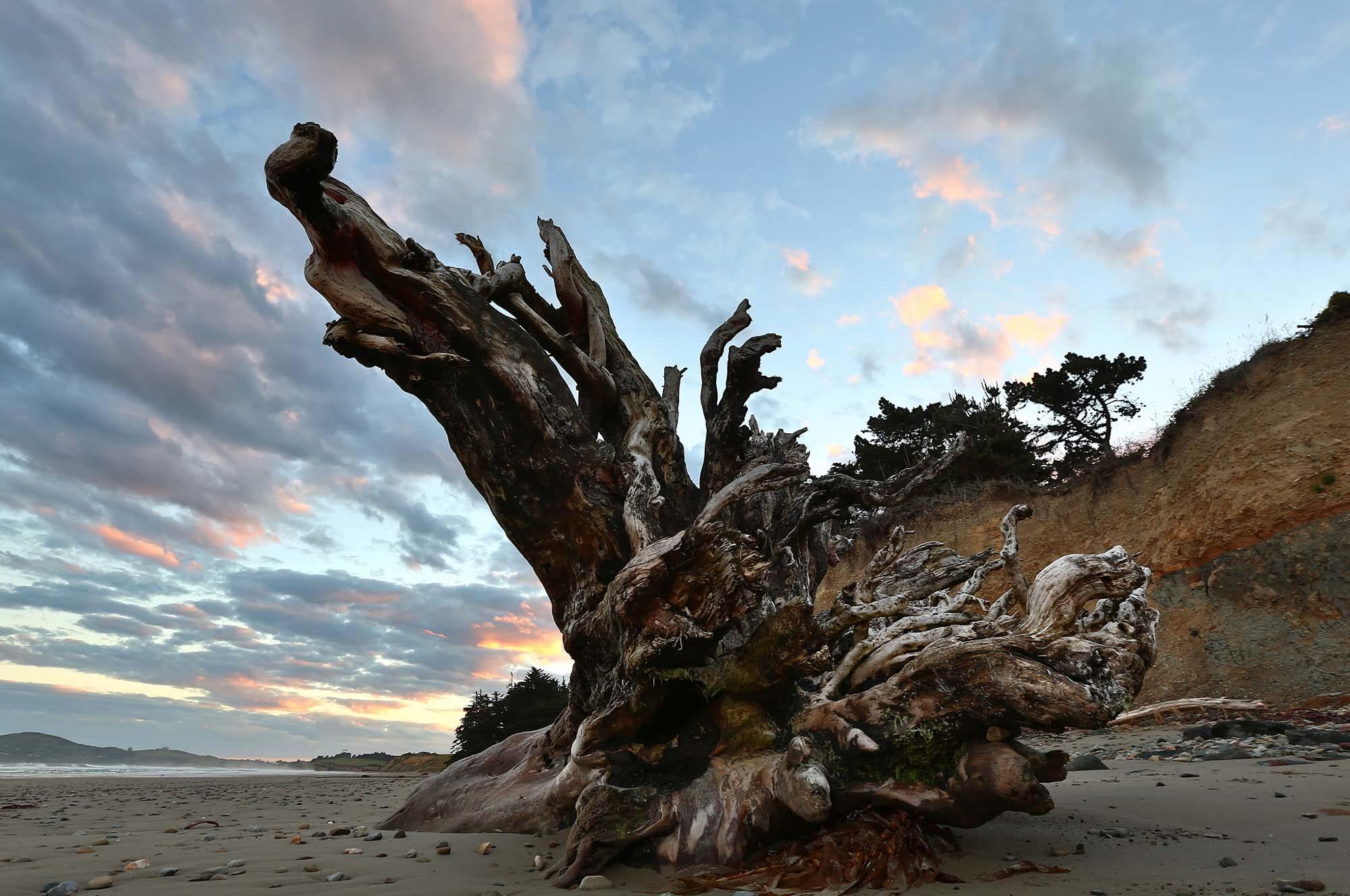 Matt-Landscape-NZ_0020_3Z6A9884